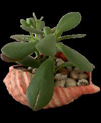 Kagyló <br/>(18 cm)